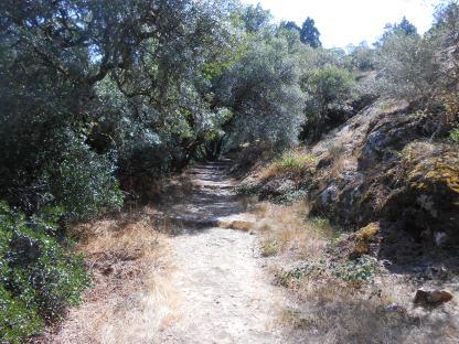 Forêt de Buçaco (11)