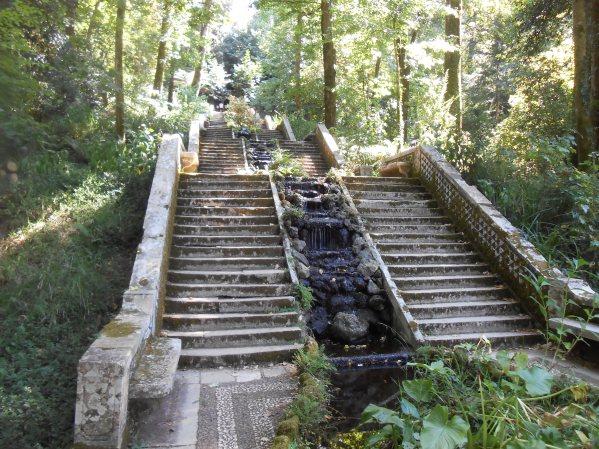 Forêt de Buçaco (51)
